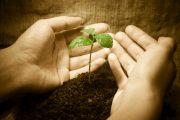 যাকাত ও ছাদাক্বা : আর্থিক পরিশুদ্ধির অনন্য মাধ্যম