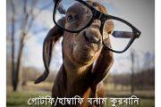 গোটফি/হাম্বাফি বনাম কুরবানি