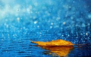 wpid-rain-ariyaamo-728x455.jpg