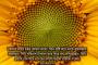 যিনি সৃষ্টি করে তাকে সুসামঞ্জস্যপূর্ণ করেছেন — আল-আ়লা ১-৫ পর্ব ১