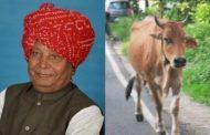 গরুর গুঁতোয় পাঁজর ভাঙল বিজেপি এমপির